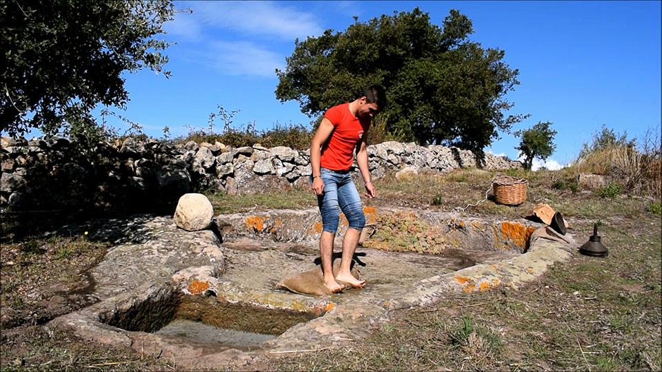 Sardegna, pigiatura uva in palmento