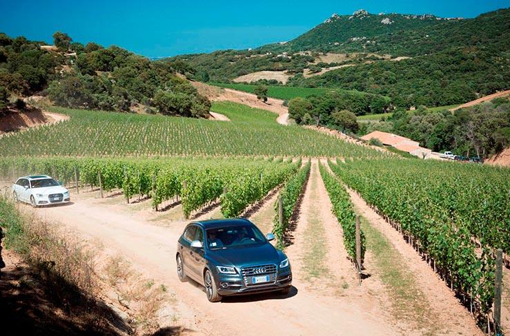 Audi in Vigna in Sardegna