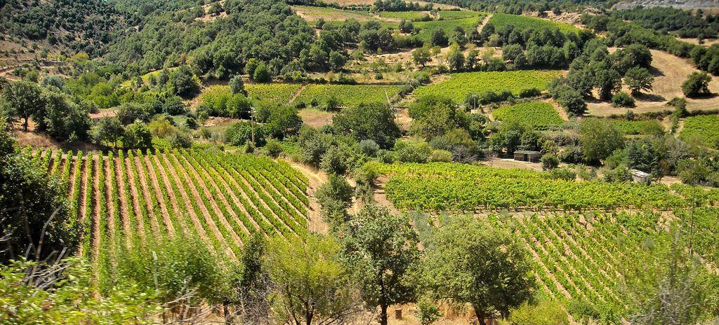Cannonau Land