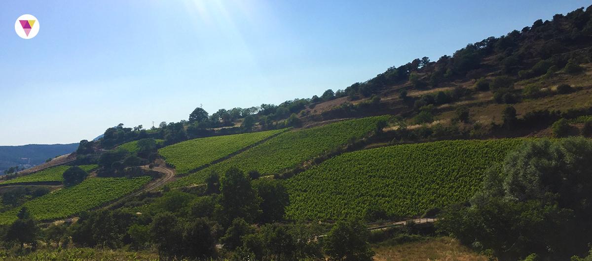 Vigna a Mamoiada, Sardegna