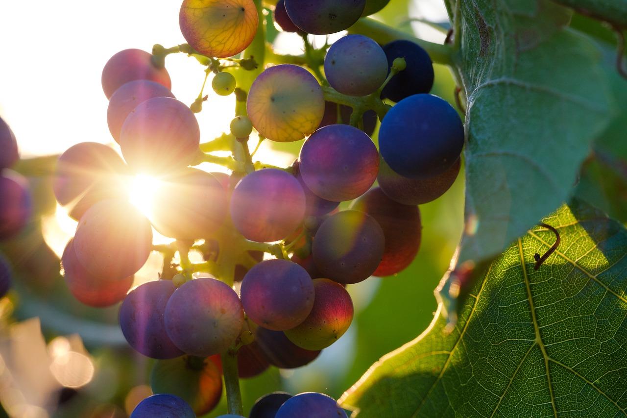Grappolo D'uva con raggio di sole
