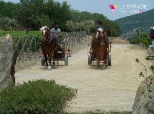 Cavalli cantina Olianas