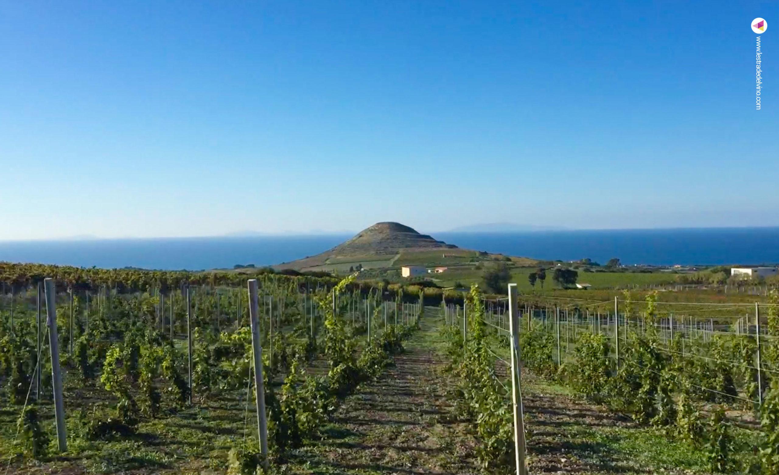 Vigna a Sorso in Sardegna