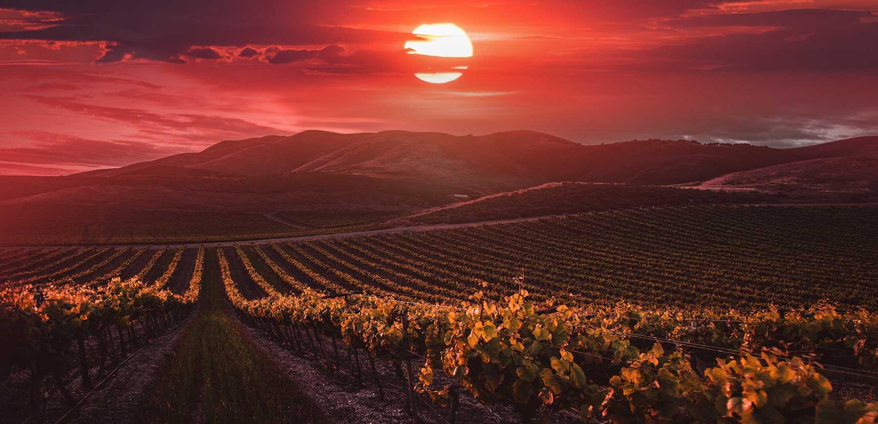 Vigna al tramonta