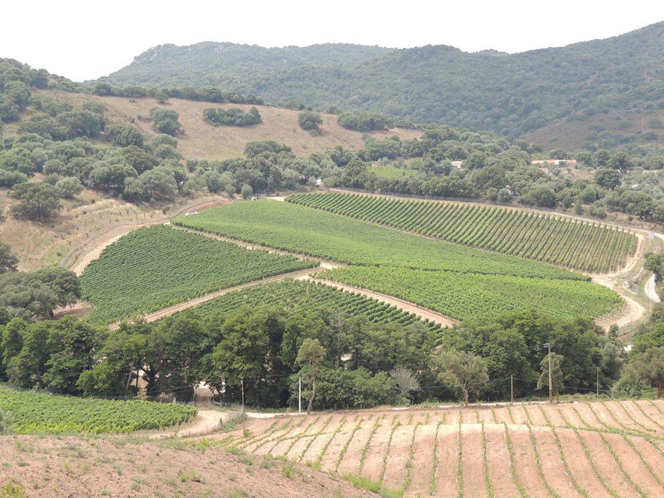 Vigna Vermentino Sardegna