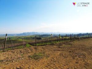Panorama cantina Su'entu