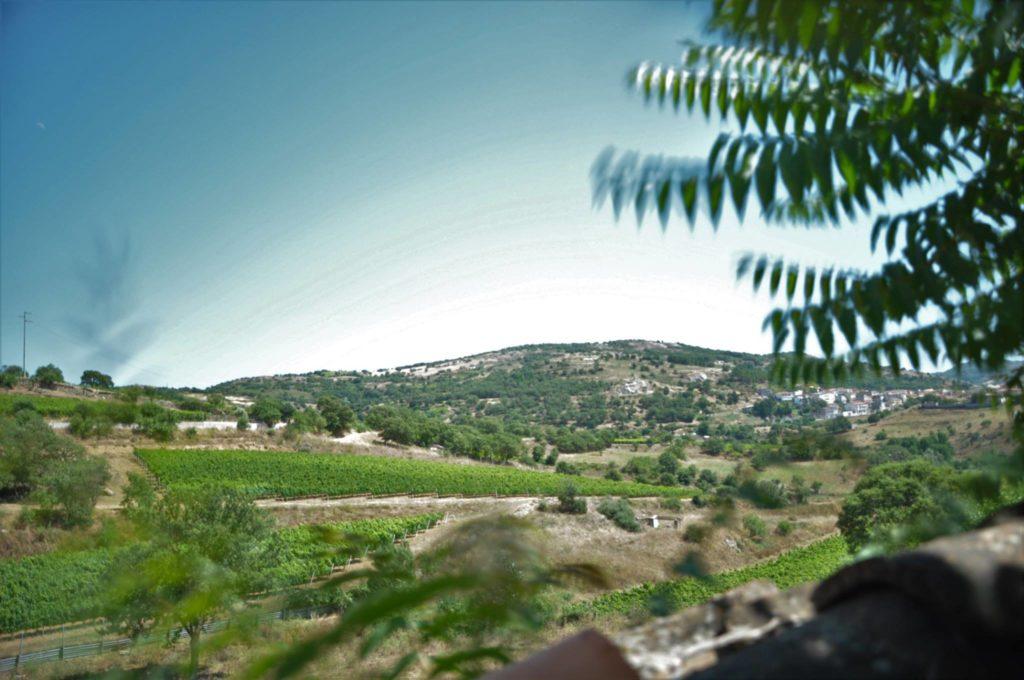 Vigneto a Mamoiada in Sardegna