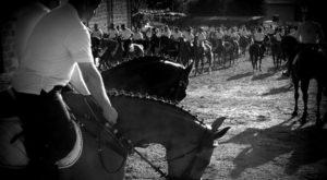 Cavalli a Torralba Sardegna