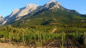 Monte Corrasi Oliena e Vigneto Puddu