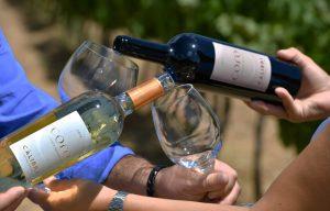 Bottiglie vino cantina Càlibri
