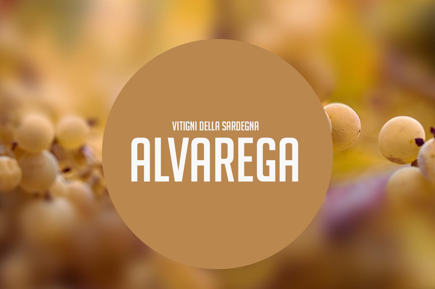 Alvarega