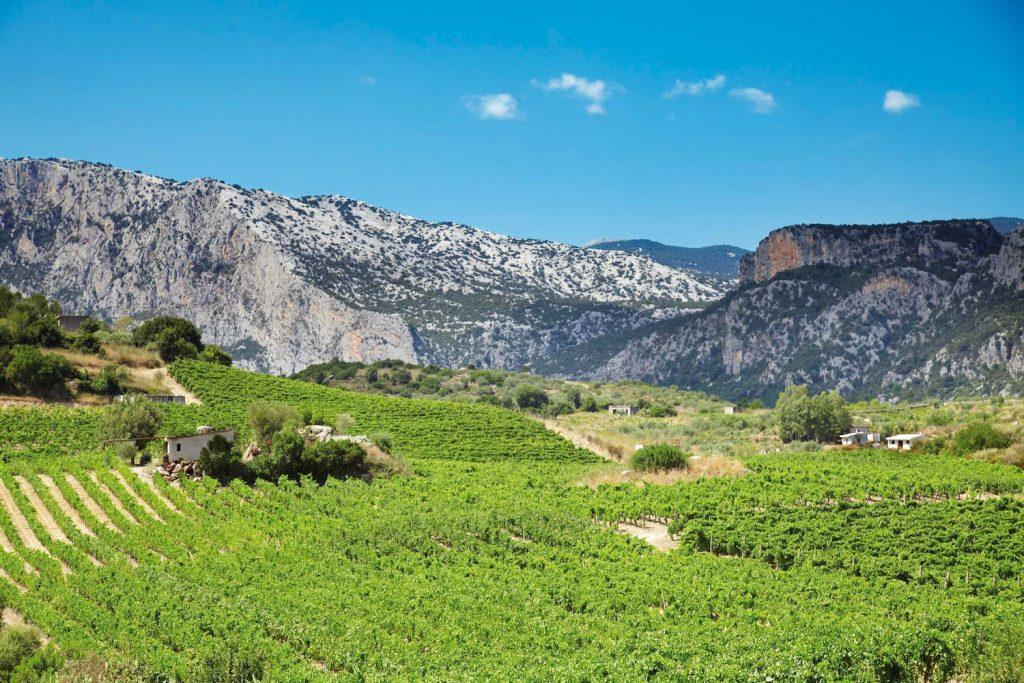 Valle di Oddoene Cantina Berritta a Dorgali